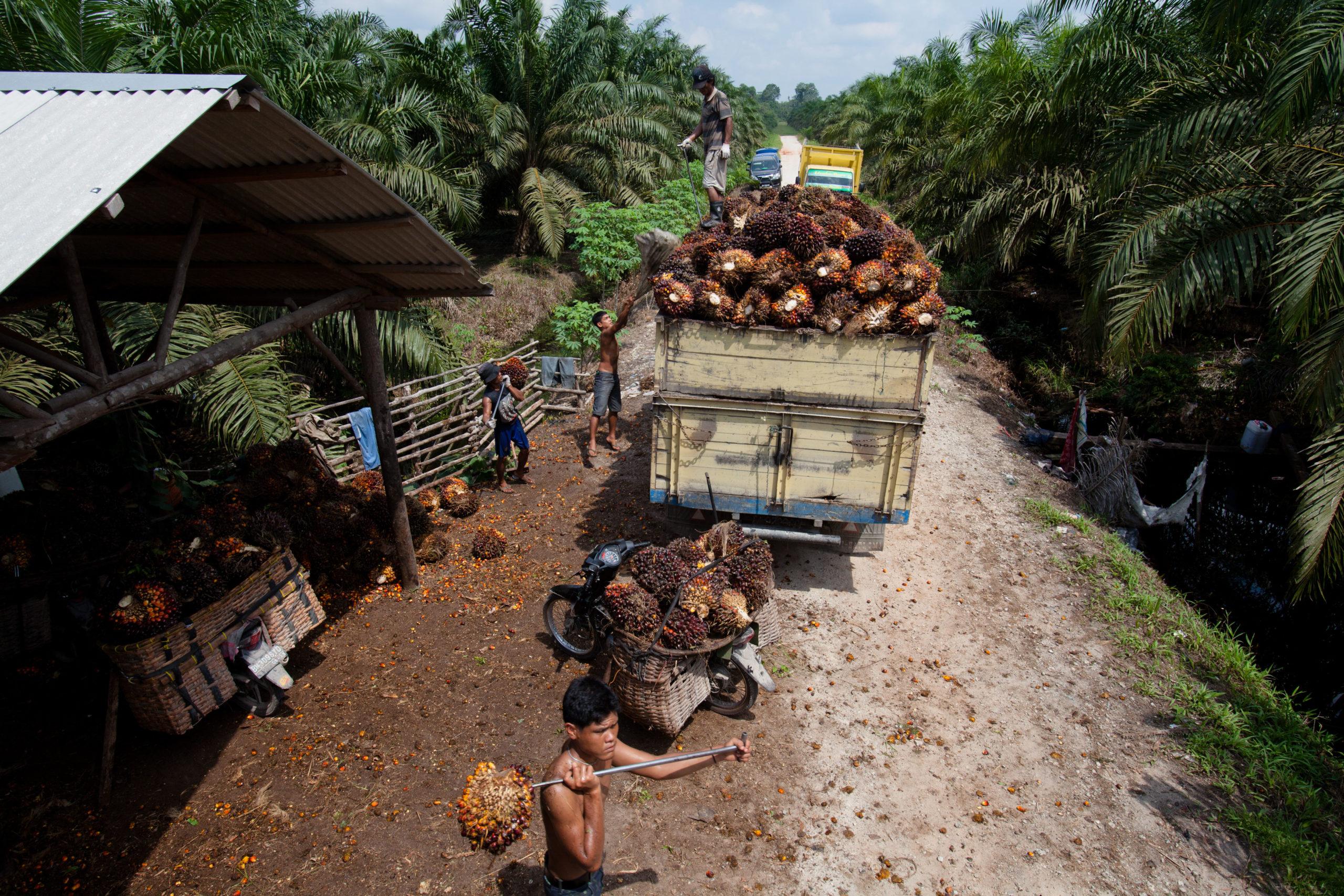palm-oil-smallholder