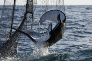 Bycatch in Northern Indian Ocean Fisheries Documentation
