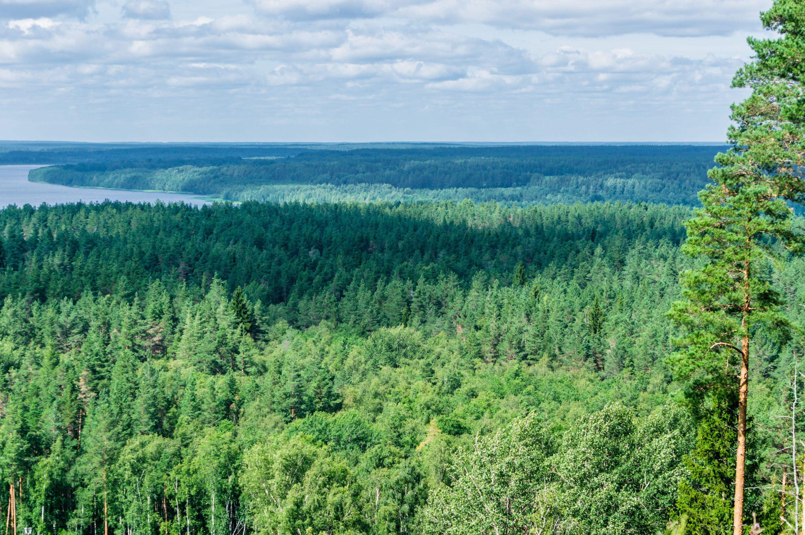 Trees in the Leningrad region