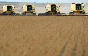soybean harvest, Mato Grosso state in Western Brazil