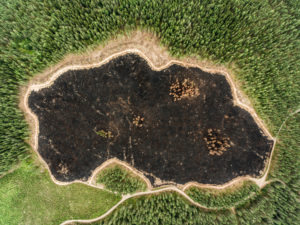 Forest Destruction in Finland