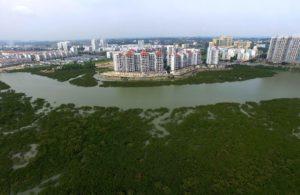 mangrove forest on the seashore in Qinzhou City, south China's Guangxi Autonomous Region