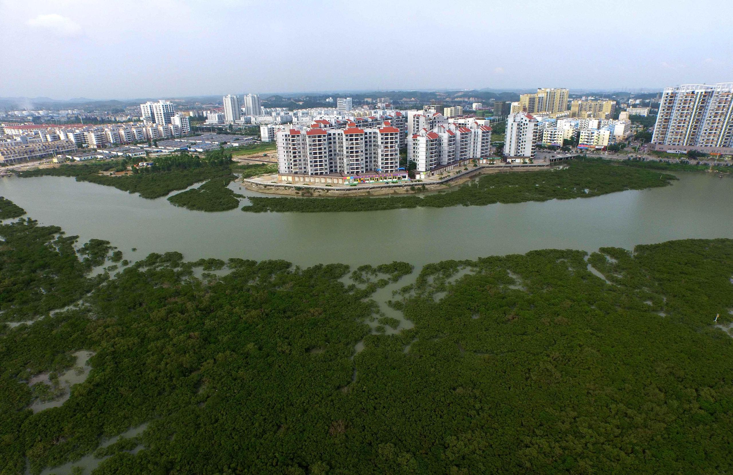Mangrove forest in front of Qinzhou city, Guangxi (Image: Huang Xiaobang / Alamy)