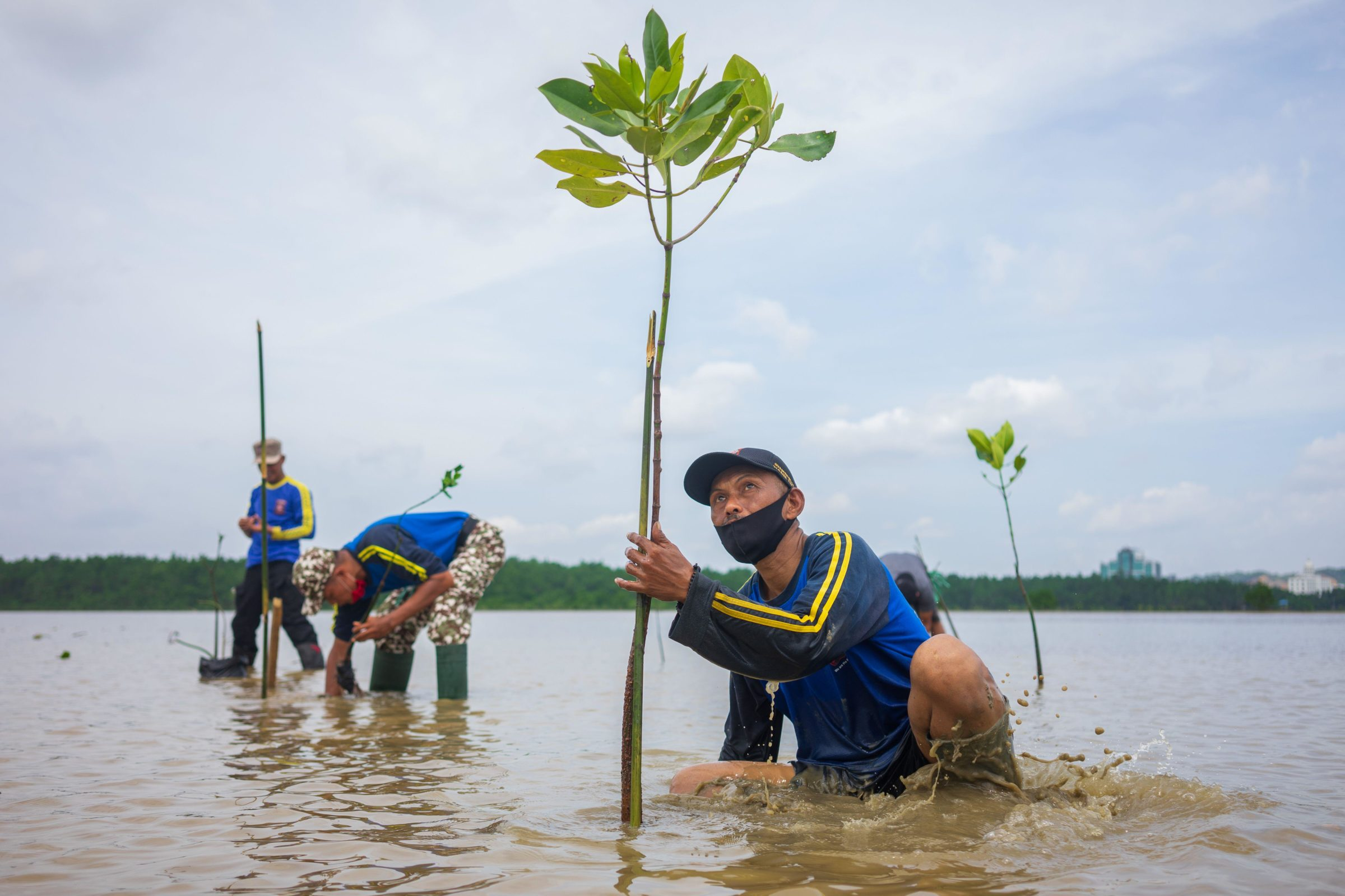 Mangrove-restoration-in-Indonesia