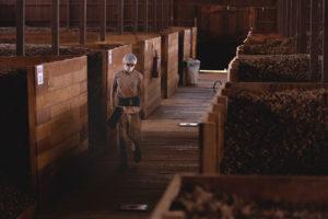 Cooperacre 位于阿克里州里奥布朗库的巴西坚果加工厂。巴西坚果是巴西亚马逊地区的本土物种,年均产量约 4万吨。图片来源:Flávia Milhorance