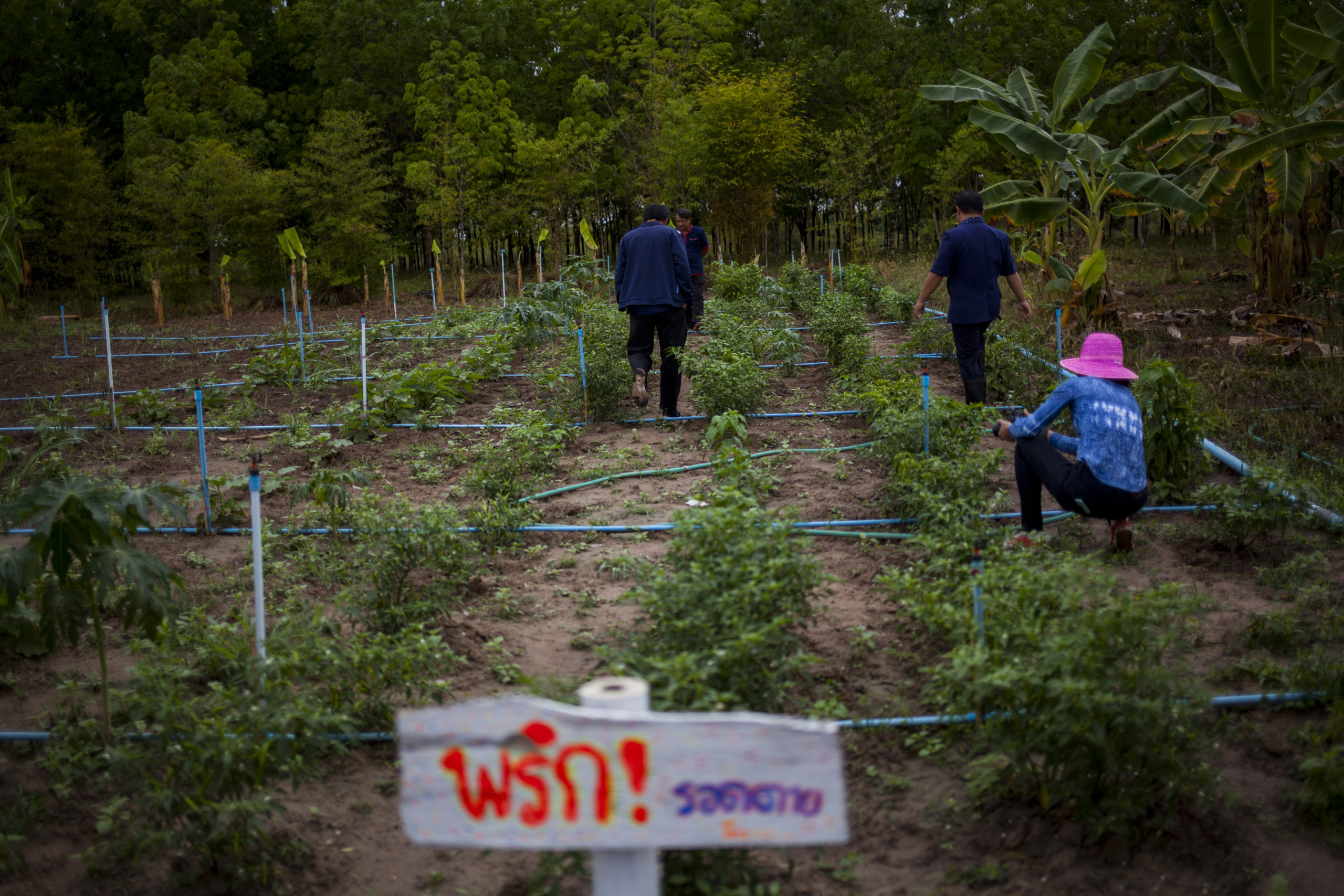 An agroecology project in Thailand