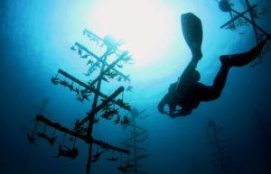 blue carbon artificial reefs