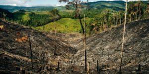 latin america environmental defenders
