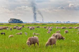 在联合国大会上,欧盟和美国宣布了《全球甲烷减排承诺》——到2030年,全球甲烷排放量要在2020年的基础上至少减少30%。甲烷主要由能源、农业和废弃物部门排放,是一种升温潜能比二氧化碳强大约80倍的温室气体。图片来源:Citizen of the Planet / Alamy