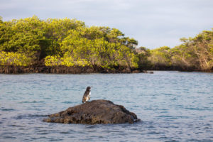 coastal mangrove forest